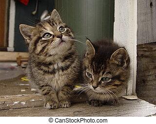 chaton, duo
