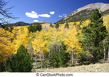 Aspen Valley - Valley full of golden aspen trees in autumn
