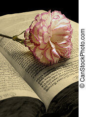 Antique book and a flower