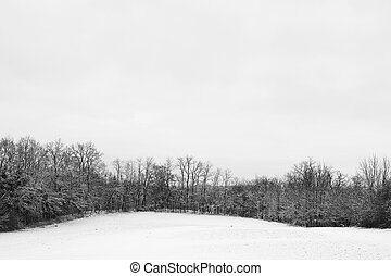 Snow Landscape 3 - Leafless trees on a snowy landscape in...