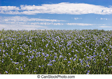 Flax Field - Blue sky and blue flax flowers