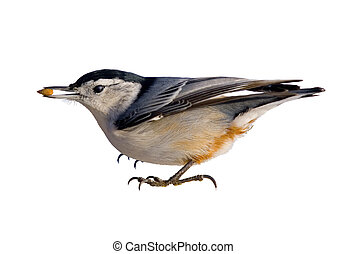 Ive got it - Nuthatch with seed in beak, Isolated on white...