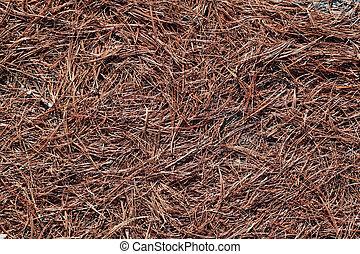 Pine needles - Dry pine needles