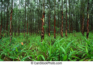 Forest - Lush greem forest