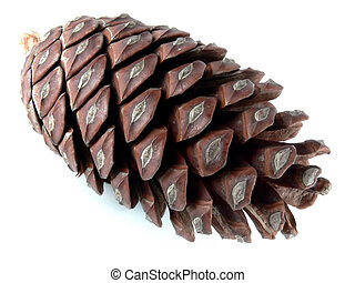 Pine Cone - Pine cone closeup over white