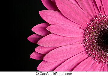 Flower - Daisy Flower