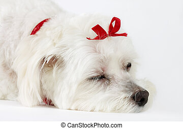 Dogs Life - This photo shows a tired or sleepy dog on a...