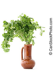fresh parsley in vase - isolated #2