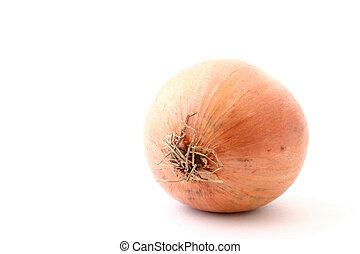 onion on white