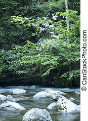 JW_029_008_05 - Little River @ Tremont, Great Smoky Mtns...