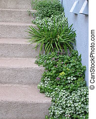 Garden Steps - The hardness of cement steps are softened by...