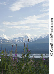 Fireweed - One of the most common summer flowers in Alaska -...