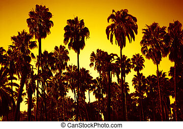 land of palms - view of palms in sunset
