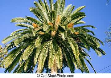 palm tree - view of palm tree