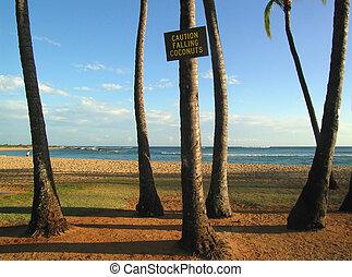 Kauai beach 1 - no grain - the dangers of kauaian beaches -...