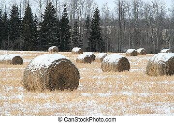 Hay Bales - Bales in snowy field
