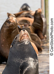 Sea Lions 3: Snobs - Close-Up photo of sea lions at the East...