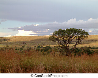 african beauty - Landscape in Madagascar,Africa.