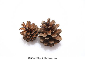 Pine Cone - Pine cone on white background