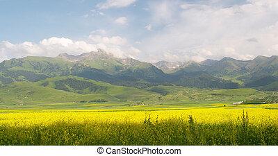 Flower field - Fields at the base of Terskey Alatau Mt Range...