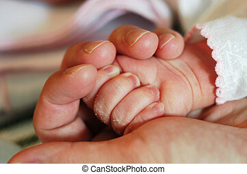 Tiny hands - New born Baby hands held by adult hand...
