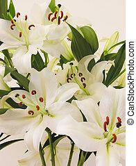 Lillies - Bunch of white lillies