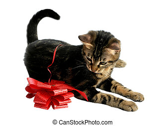 Kitten With Bow - Kitten playing with a red bow