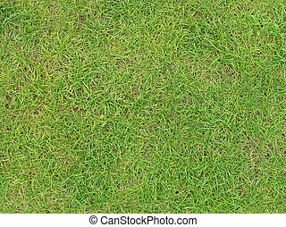 Green grass - tiled green grass texture