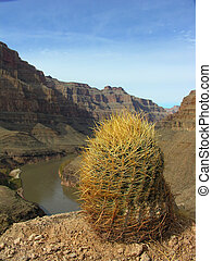 Grand Canyon - The Grand Canyon with a cacti in the...
