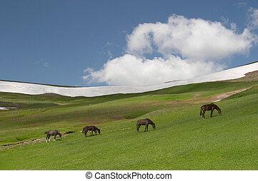 Horses grazing, Kyrgyzstan
