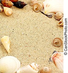 Sea Shells - Shells borde on sand