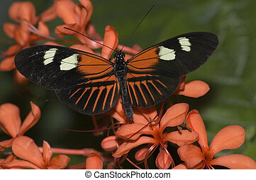 Butterfly - Orange and black butterfly on flowers