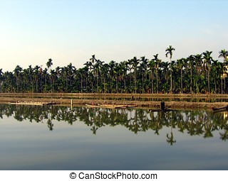Palm Trees and Fish Ponds