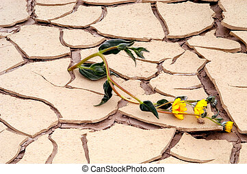 Persevere - Flower strives to live in dried up lake bed in...