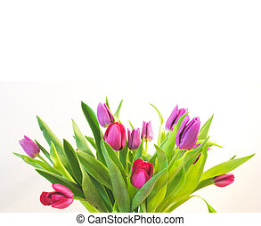 Tulips - Bunch of tulips
