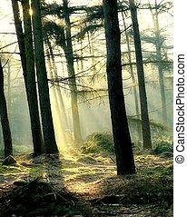 streaming sunlight - Morning sunlight streaming through...