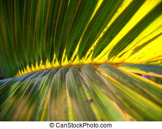 Palm Fronds Illuminated by the Sun