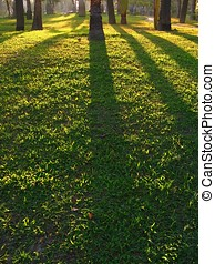 Afternoon Sun Casting Shadows - -- across the lush grass...