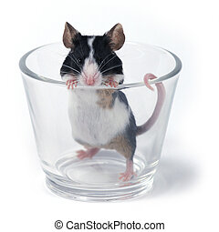glass of... mouse - mouse in a glass on a white background