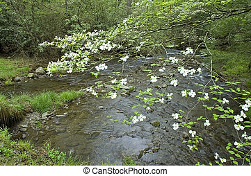 JW_014_121_05 - Dogwood, Spring, Cades Cove, Great Smoky...