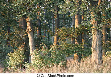 Forest in the evening sun
