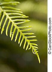 Wet Fern - Water droplets on a fern leaf