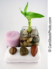 Bamboo Plant - A bamboo plant, a purple candle, facecloths...