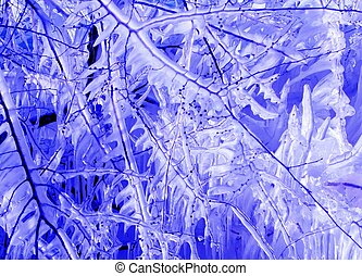Blue Icicles - Branches encased in ice