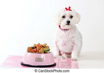 Obedient Dog - Obedient dog sitting by a bowl of dog food