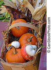 Harvest Basket - Basket filled with small orange and white...