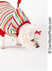 Sniffing Dog - Animal Behaviour - Dog sniffing