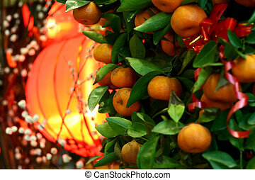 Mandarin orange - Chinese New Year Mandarin orange tree...
