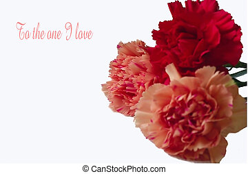 loving gesture - carnations as a gift