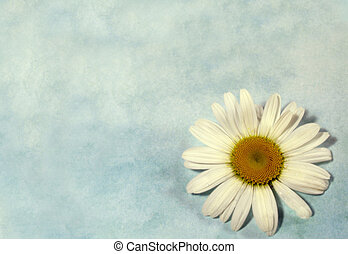 Daisy background - Daisy on blue textured background